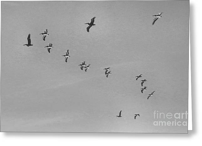 Flock Of Flying White Pelicans Greeting Cards - Pelican Flying Formation II Greeting Card by Scott Cameron