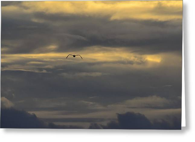 Pelicaniformes Greeting Cards - Pelican Flying in Golden Clouds Greeting Card by Steve Samples