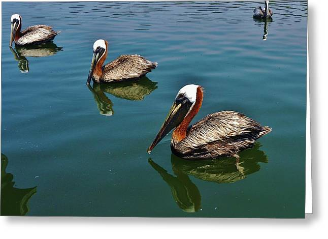 Sailboat Ocean Greeting Cards - Pelican Hatteras 1 7/02 Greeting Card by Mark Lemmon