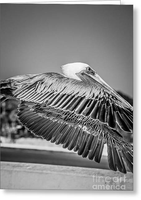 White Wing Greeting Cards - Pelican in Flight White Street Pier Key West - Black and White Greeting Card by Ian Monk