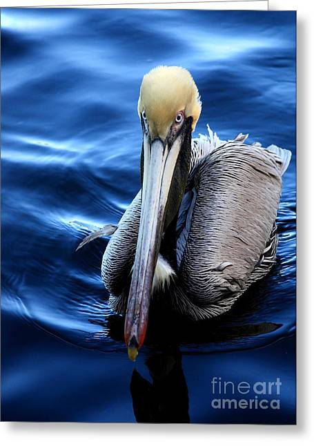 Seabirds Greeting Cards - Pelican in the Bay Greeting Card by Carol Groenen