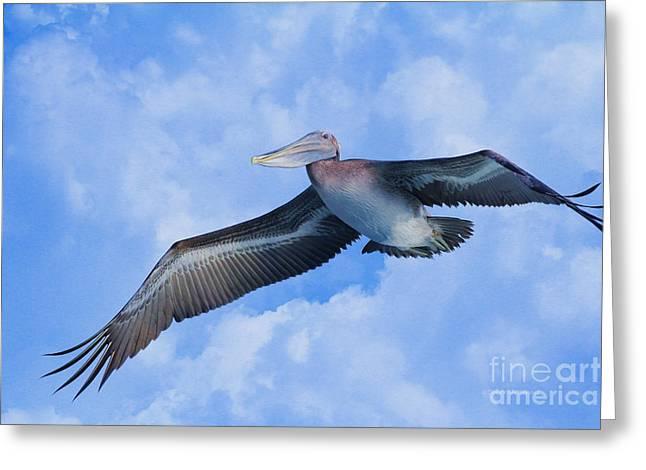 Fish In Ocean Greeting Cards - Pelican in the clouds Greeting Card by Deborah Benoit