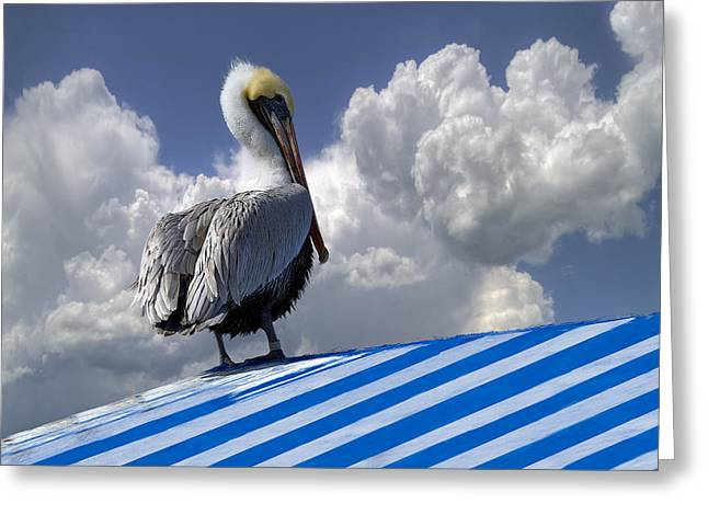 Summer Awnings Greeting Cards - Pelican in the Clouds Greeting Card by Debra and Dave Vanderlaan
