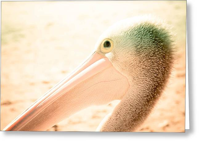 Seabirds Greeting Cards - Pelican Greeting Card by Lah
