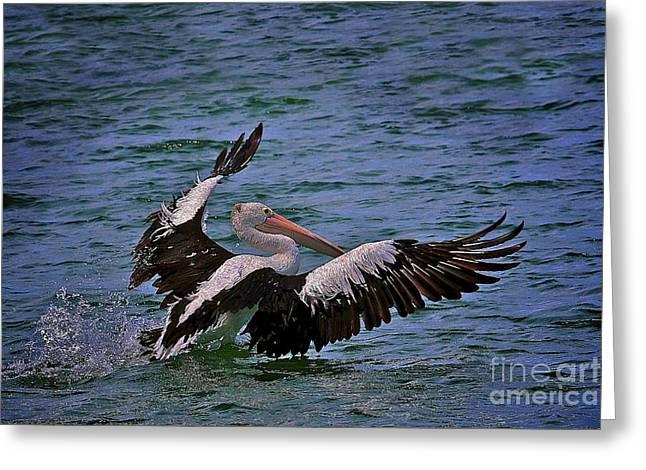 Pelican Landing Greeting Card by Heng Tan