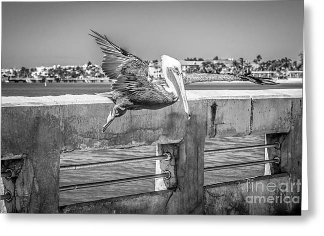 Liberal Greeting Cards - Pelican Landing White Street Pier Key West - Black and White Greeting Card by Ian Monk