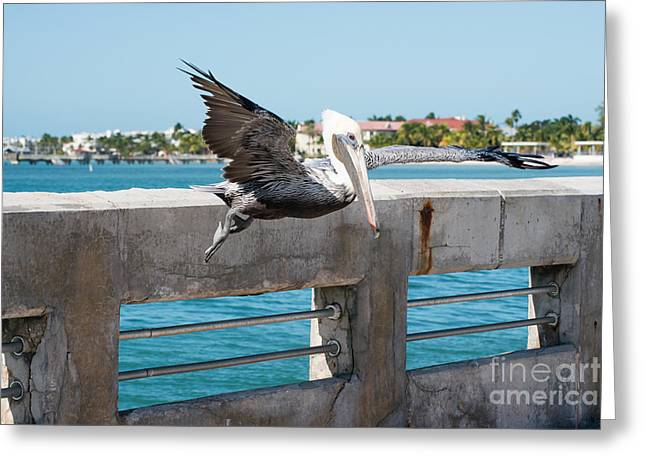 West Wing Greeting Cards - Pelican Landing White Street Pier Key West Greeting Card by Ian Monk