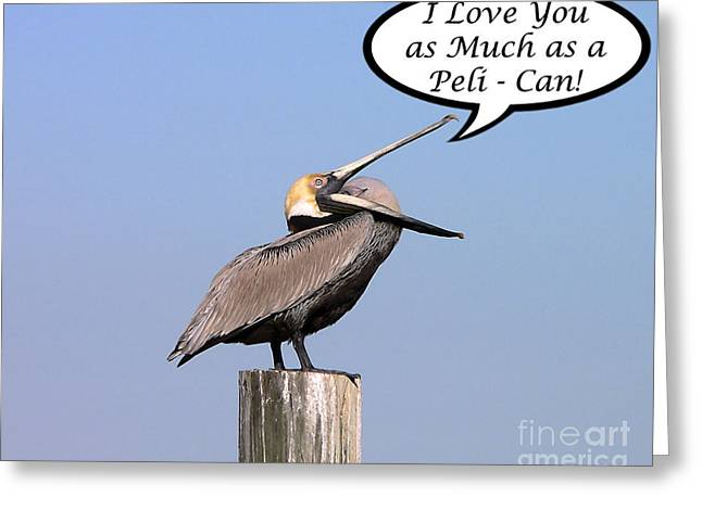 Seabirds Greeting Cards - Pelican Love You Card Greeting Card by Al Powell Photography USA