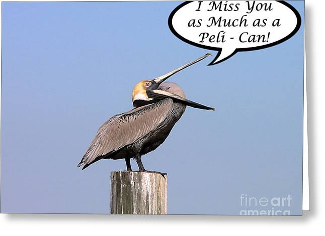 Seabirds Greeting Cards - Pelican Miss You Card Greeting Card by Al Powell Photography USA