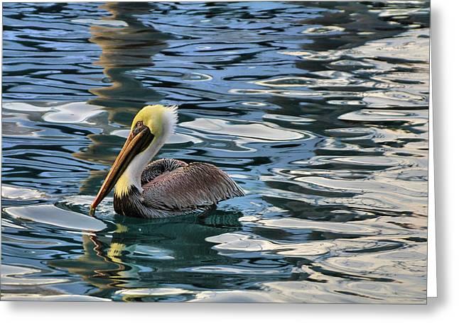 Waterway Birds Greeting Cards - Pelican Monet Greeting Card by Debra and Dave Vanderlaan