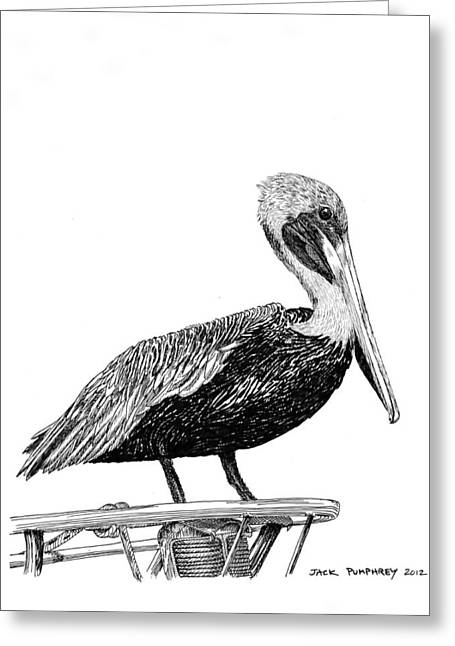 Large Birds Greeting Cards - Pelican of Monterey Greeting Card by Jack Pumphrey