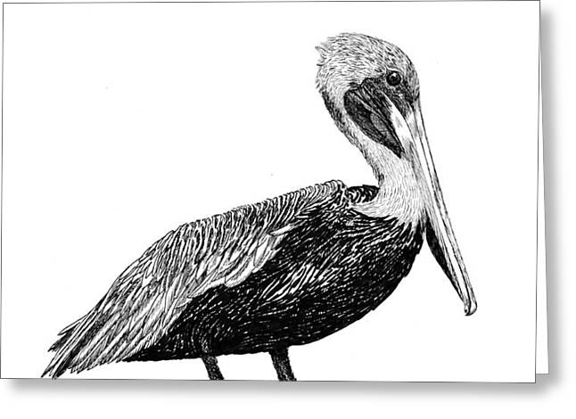 Pelican of Monterey Greeting Card by Jack Pumphrey