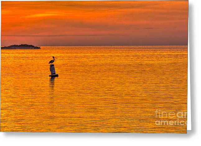 Pelican On A Buoy Greeting Card by Marvin Spates