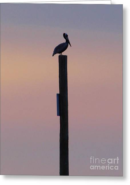 Reflection Of Sun In Clouds Greeting Cards - Pelican On A Post Greeting Card by D Hackett