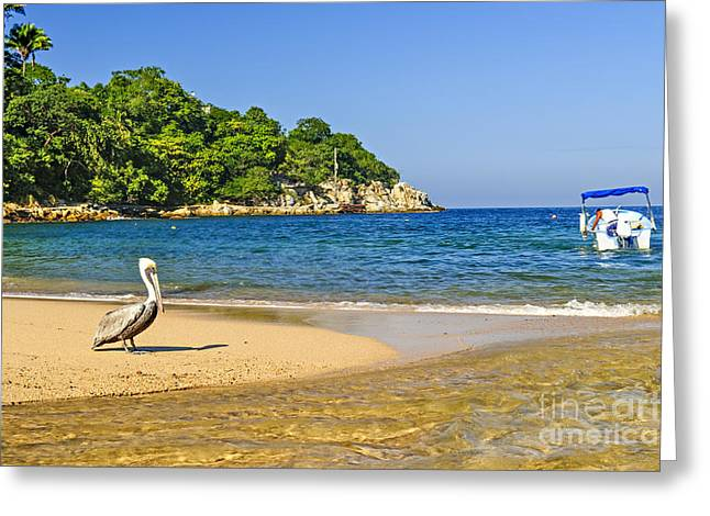 Beach Scenery Greeting Cards - Pelican on beach Greeting Card by Elena Elisseeva