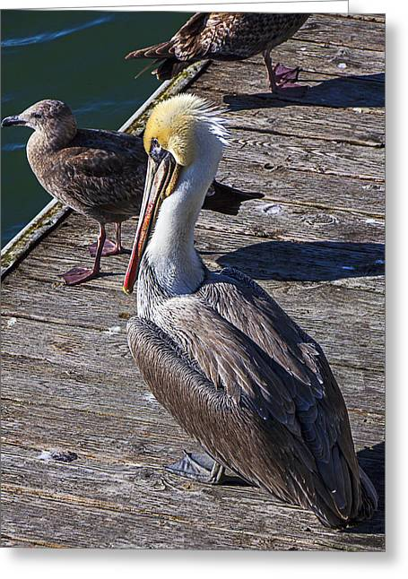 Seagull Greeting Cards - Pelican on dock Greeting Card by Garry Gay