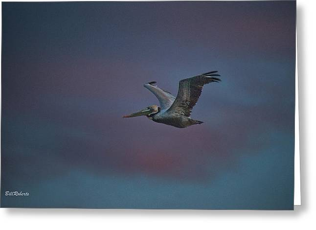 Pelican On The Wing Greeting Card by Bill Roberts