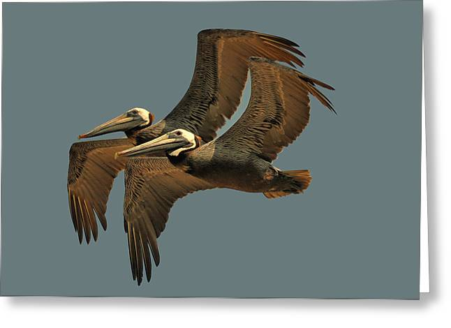 Pelican Pair  - Obx0c4002e Greeting Card by Paul Lyndon Phillips