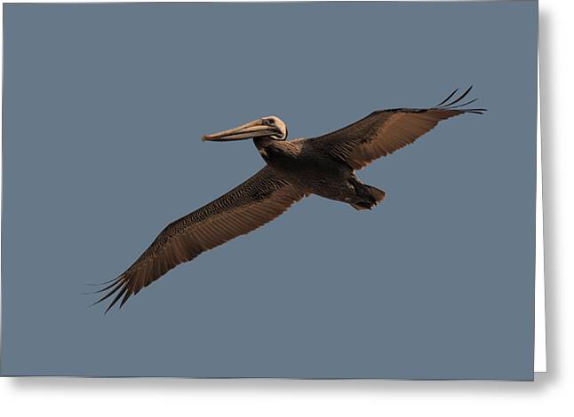 Paul Lyndon Phillips Greeting Cards - Pelican Passing over at Nags Head - OBX03912d Greeting Card by Paul Lyndon Phillips