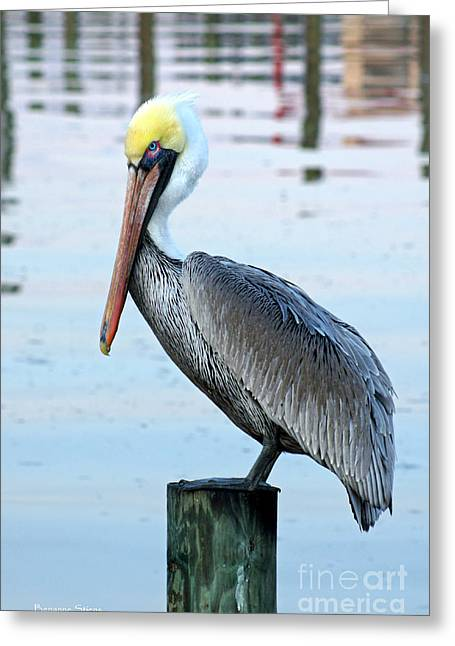 Water Fowl Photographs Greeting Cards - Pelican Perch Greeting Card by Benanne Stiens
