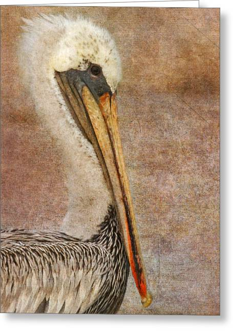 Distinguished Greeting Cards - Pelican Portrait Greeting Card by Angie Vogel