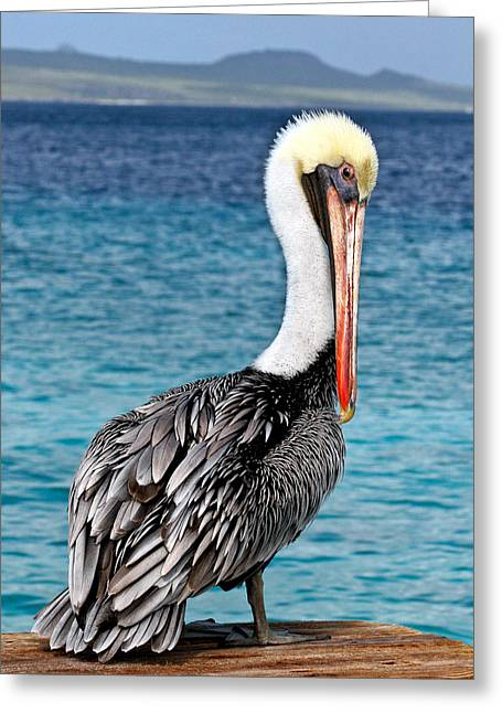 Crisp Greeting Cards - Pelican Portrait Greeting Card by Jean Noren
