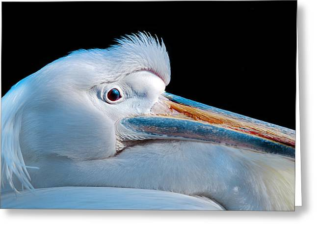 Pelicans Greeting Cards - Pelican Portrait Greeting Card by Mark Rogan
