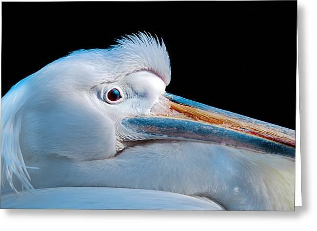 Pelican Portrait Greeting Card by Mark Rogan