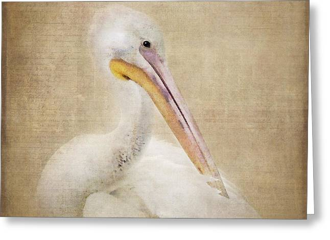 Textured Photograph Greeting Cards - Pelican Primping Greeting Card by Betty LaRue
