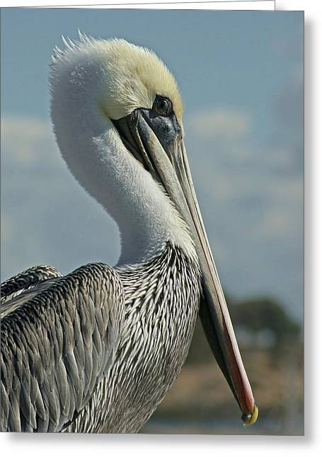 Pelican Greeting Cards - Pelican Profile 3 Greeting Card by Ernie Echols