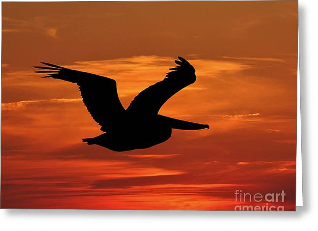 Sunset Posters Greeting Cards - Pelican Profile Greeting Card by Al Powell Photography USA