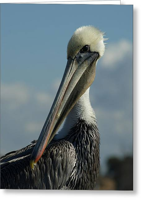 Pelican Greeting Cards - Pelican Profile Greeting Card by Ernie Echols