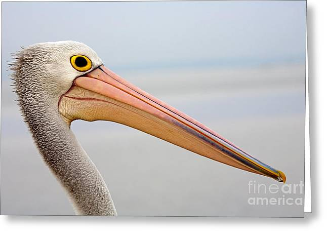 Seabirds Photographs Greeting Cards - Pelican Profile Greeting Card by Mike  Dawson