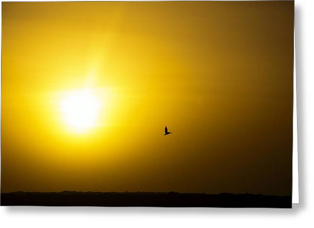 Summer Scene Greeting Cards - Pelican Silhouette Greeting Card by Jess Kraft