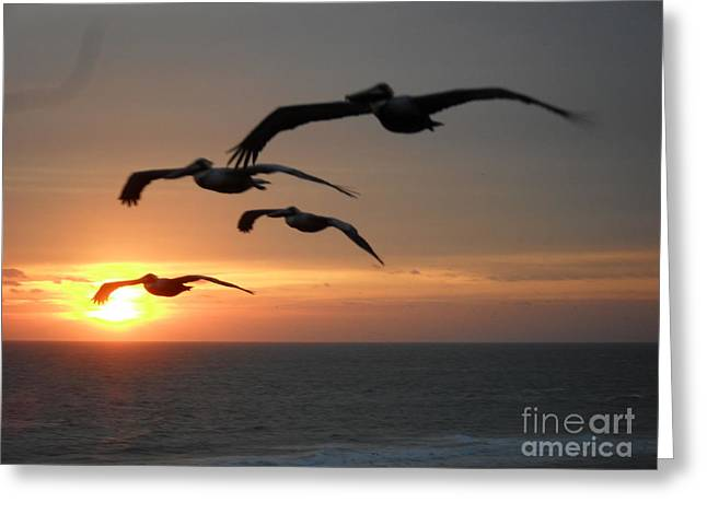 Pelican Sun up Greeting Card by Laurie D Lundquist