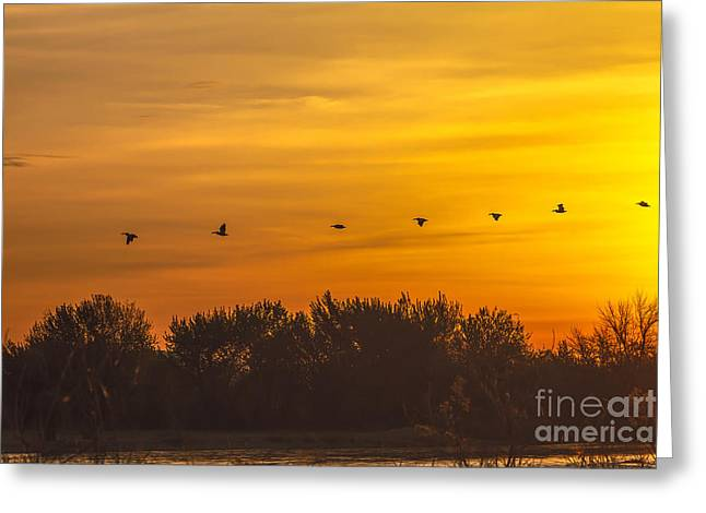 Haybale Greeting Cards - Pelican Sunrise Greeting Card by Robert Bales