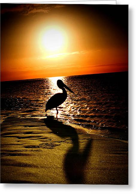 Monkey Mia Greeting Cards - Pelican Sunrise Greeting Card by Yew Kwang