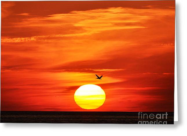Pelicans Flying Greeting Cards - Pelican Sunset Greeting Card by Al Powell Photography USA