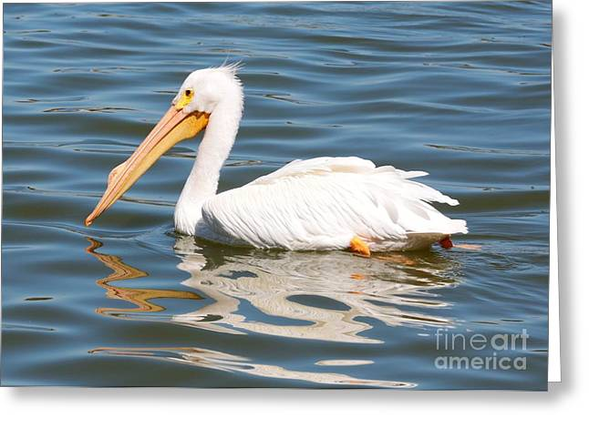 Recently Sold -  - Reflection In Water Greeting Cards - Pelican Swirls Greeting Card by Carol Groenen