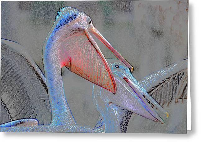 Talking Digital Greeting Cards - Pelican talk Greeting Card by David Lee Thompson