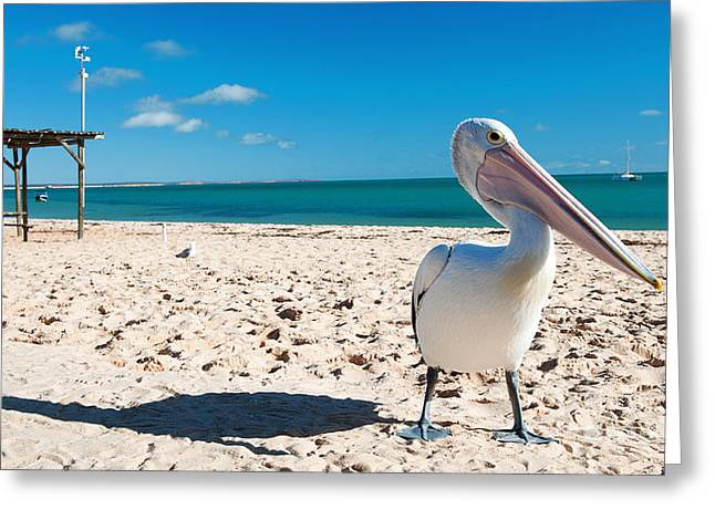Monkey Mia Greeting Cards - Pelican under blue sky Greeting Card by Yew Kwang