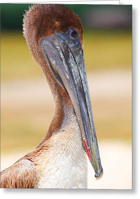 Dry Tortugas National Park Greeting Cards - Pelican up close at Dry Tortugas National Park Greeting Card by Jetson Nguyen