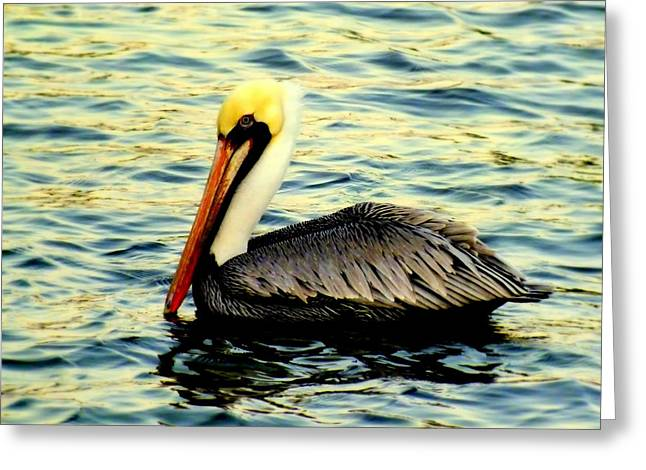 Ocean Scenes Greeting Cards - Pelican Waters Greeting Card by Karen Wiles