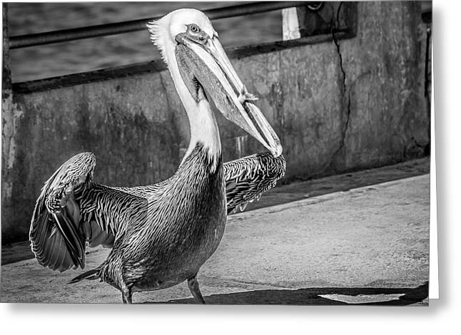 Liberal Greeting Cards - Pelican with Fish White Street Pier Key West - Square - Black and White Greeting Card by Ian Monk