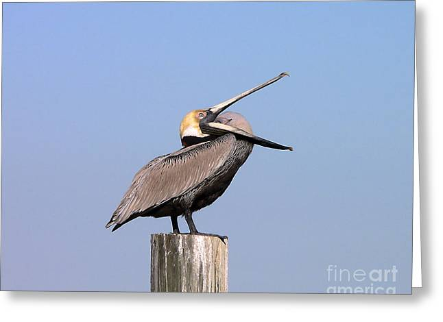 Al Powell Photography Usa Greeting Cards - Pelican Yawn Greeting Card by Al Powell Photography USA