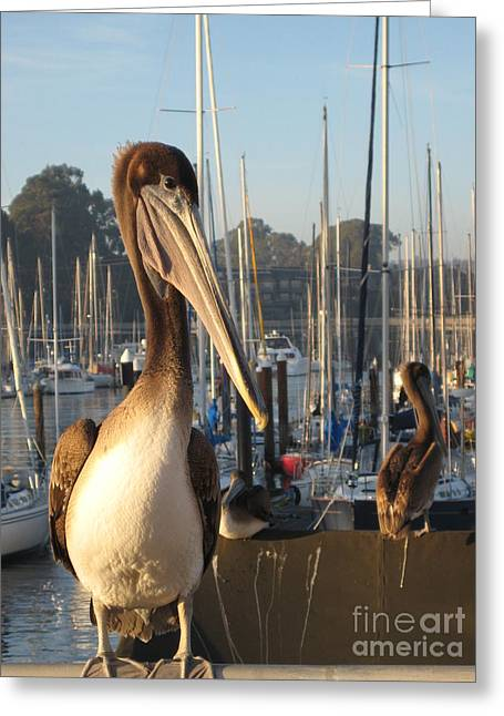 Santa Cruz Ca Greeting Cards - Pelican2 Greeting Card by Theresa Ramos-DuVon