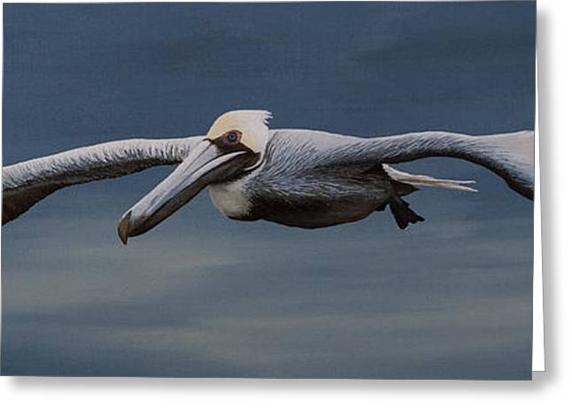 Seabirds Greeting Cards - Pelicano Greeting Card by Matthew Haddaway