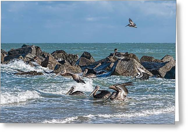 Water Fowl Greeting Cards - Pelicans 904 Greeting Card by Rudy Umans