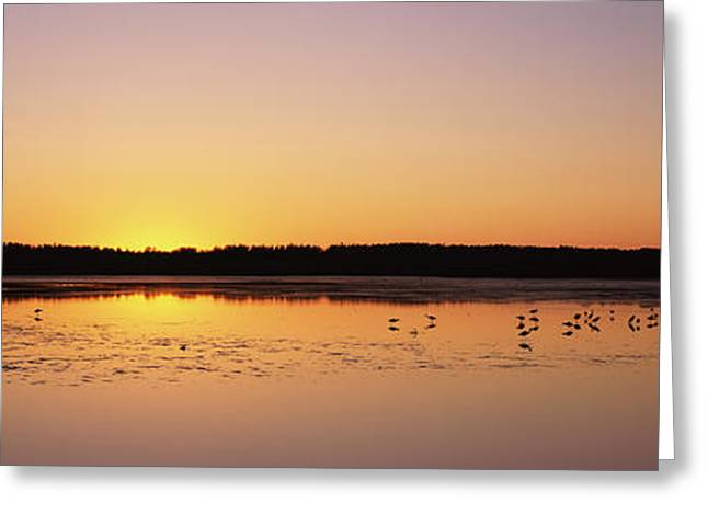 J N Ding Darling National Wildlife Refuge Greeting Cards - Pelicans And Other Wading Birds Greeting Card by Panoramic Images