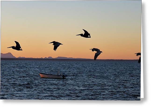 Ladnscape Greeting Cards - Pelicans at dusk Greeting Card by Pamela Weston